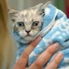 Okupajte mačku