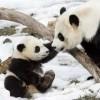 Okrutne majke iz životinjskog carstva