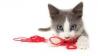 Kupanje mačaka – kako ga učiniti zanimljivim?