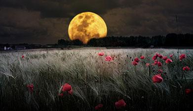 Tvoj mesec