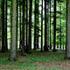 Nega gozdov je odgovornost lastnikov